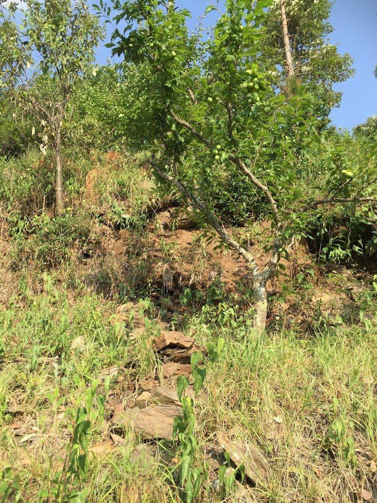 6.5 Lacs – 2.5 Nali Residential Land in Nathuakhan, Uttarakhand
