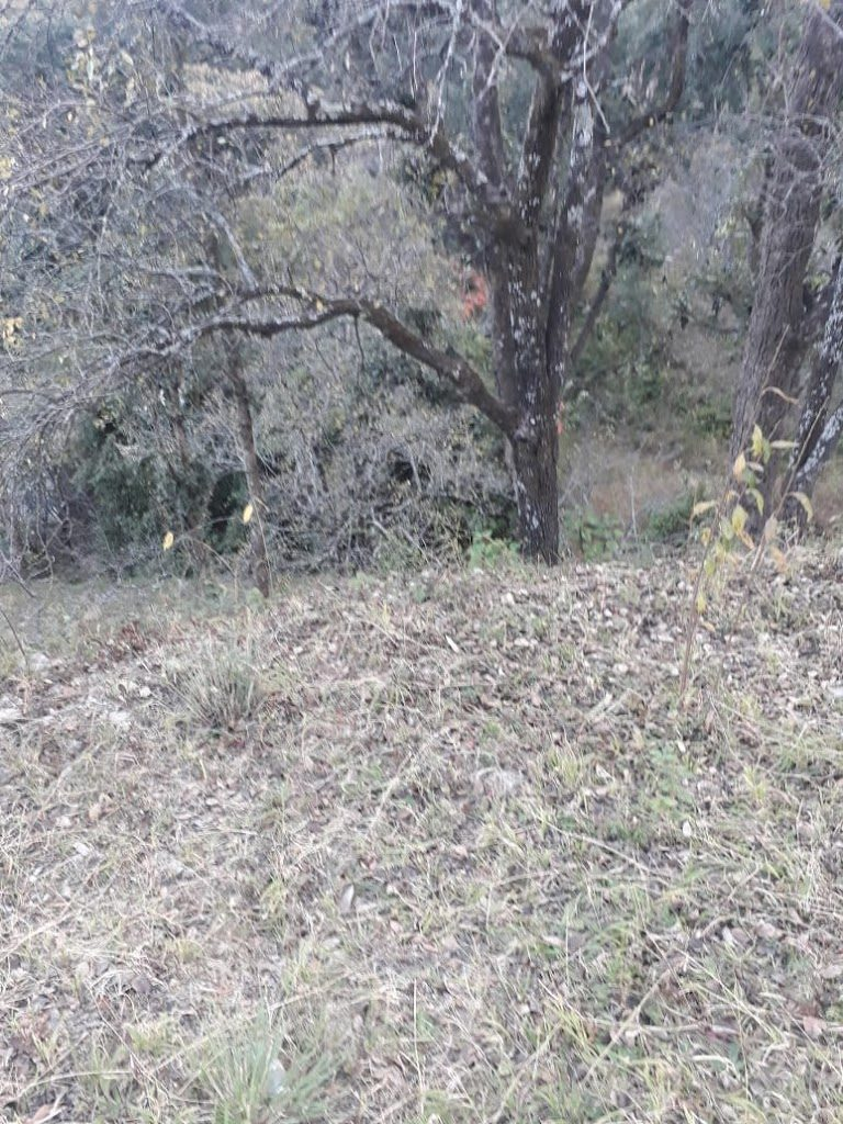 8.5 Lac – 5 Nali Himalayan View Plot in Sitla (Seetla)