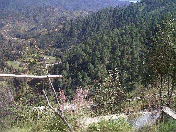 5 lakhs – 5 nali residential land in Padampuri, Mukteshwar in Uttarakhand